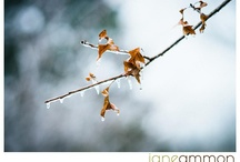 As I Pause: Things that Inspire Me / by Jane Ammon-Photographer