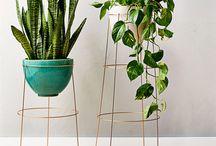 kert , növények