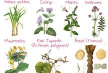 Plantas que gustan a los gatos