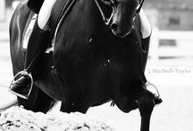 Equestrian style, horses :)