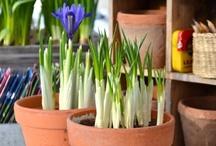 Oma kasvari / My Greenhouse