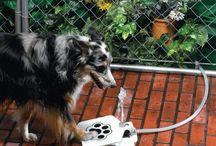 Pet gadgets / Evcil hayvanlar için