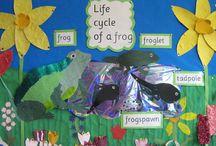 Life Cycles Kindergarten