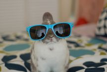 Tigers & Hipster Bunny