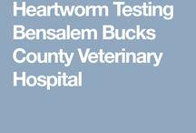 Bensalem Veterinary Hospital