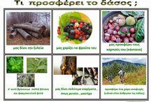 ζώα δάσους