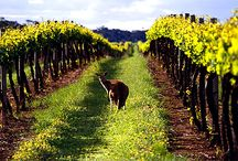 Australian Wines / Wines from our friends down under in Australia ;)  / by Wine Library