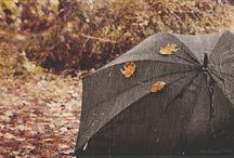 Raining♡|Foxtail