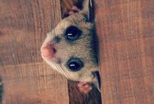 Mouse brown mix