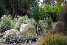 NZ native garden