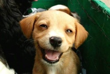 Smiling Dogs / I swear dogs know to pose for the camera / by Monetya