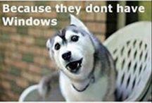 Câini comici