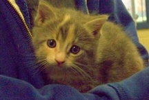 Kittens! / All things cat-related!