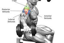 Anatomy websites