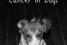 Cancer in pets.