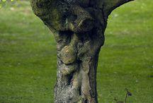 tree faces#tree bodies