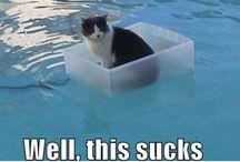 koty lubiom wode