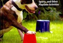 Awesome Activities for Your Pet