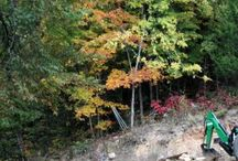 2015 Fall Color