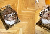 Bichon / Lego kutyus képei
