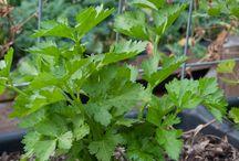 veggiesgarden