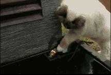 Katze rettet Fisch !!