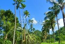 Martinique - Little Paradise Island ♥ Home ♥ / by Bluedarkat Lem