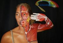 Anatomisch bodypainten