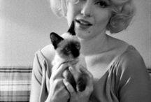 I ❤️ Marilyn