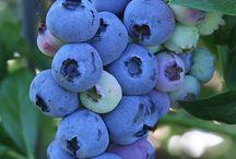 Fruits n Vegs