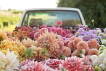 Floret farm