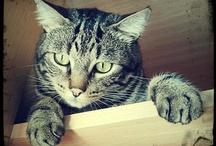 My animals / Lupo, Buba, Ringo, Bernard, ...
