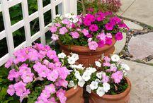 My Garden / 2013 / by Bridget