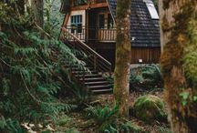 | forest houses |