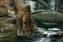"Animal ""South America"" / by Theresa Clark"