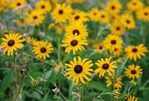 Pollinator-Attracting Flowers / Especially helpful for veggie gardens! Other hints: make your flower beds at least 3' by 3' and give your bees other perches to land on. Keep it out in the open so they can see it and offer bee baths...little bowls of water full of rocks.