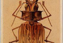 Owady / owady