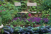 Kitchen garden / by Lisa Dunford