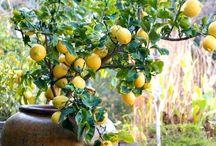 Verde flores frutos