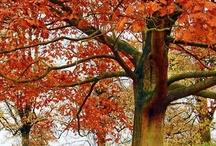 Herfst / Autumn