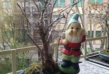 MY bonsai