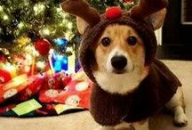 Holiday Hounds / Pets can make the holidays especially memorable, whether its remembering how excited your dog was to get new toys as a present, or thinking about your dog trying to steal the Christmas ham.