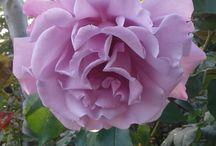 Profumi e colori / amo il mio giardino, adoro la natura in ogni momento
