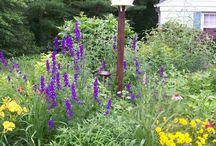 Front garden / by Jennifer Krall