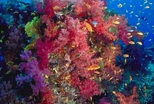Paradise Underwater! / Beautiful scenes from Gods awesome underwater world!