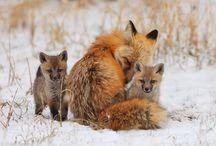 Colorado Wildlife / Abundant Wildlife found here