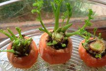 vegetales- cosecha