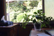 my room / 光が差し込む大きな窓辺 窓を開けると小鳥のさえずり、 爽やかな風と緑が吹き込んでくる  植物園になりかけてる私の部屋