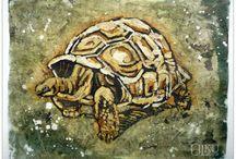 tortoise/turtles