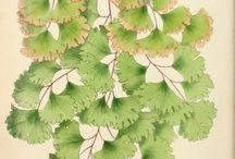 Greenery / Botanical Illustration